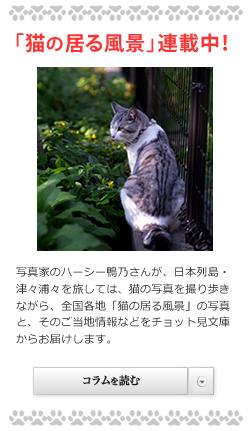 「猫の居る風景」ブログ公開中